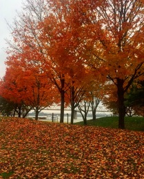 Fall in Louisville